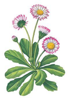 13 Folk Art Flowers, Flower Art, Bird Houses Painted, Vintage Botanical Prints, Art Drawings Sketches Simple, Flower Clipart, Botanical Illustration, Yard Art, Pattern Art