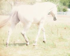 Ethereal Light Horse Fine Art Photo, by SylviaCPhotography at etsy