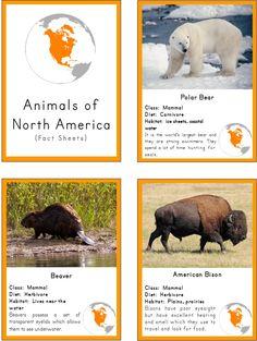 Montessori Inspired Animals of North America 3 Part Cards and Fact Cards North America Flag, North America Continent, Montessori Materials, Montessori Activities, North American Animals, Native American, Edible Wild Plants, Thinking Day, Socialism