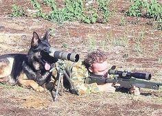 軍用犬訓練! 犬もスコープがかかせません。