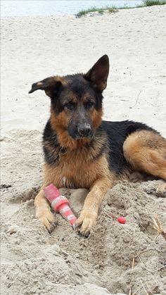 Hunde Foto: Stephanie und Murphy - Chillen am Strand Hier Dein Bild hochladen: http://ichliebehunde.com/hund-des-tages  #hund #hunde #hundebild #hundebilder #dog #dogs #dogfun  #dogpic #dogpictures