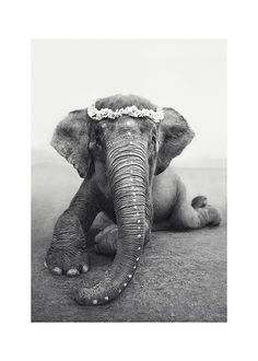 Sweetest Adele poster from Love Warriors photo art is now available at Desenio. Buy Love Warriors' beautiful photo art here. Photo Elephant, Asian Elephant, Elephant Love, Elephant Poster, Baby Elephants, Beautiful Creatures, Animals Beautiful, Cute Animals, Elephant Photography