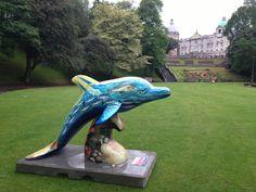 #wilddolphins
