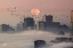 Milky way scientists - Pink Moon  Copyright : MO AOUN