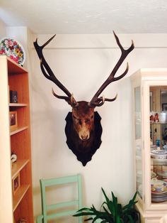 Winston, taxidermy stag, dining room