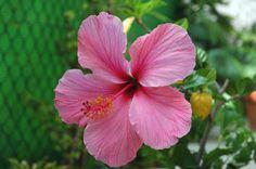 mar pacifico flor -