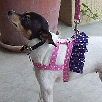 Ruffled Easy-On Dog Harness   Adjustable Harness for Small Dog in Fashion Fabrics   UDogU High Fashion Dogwear
