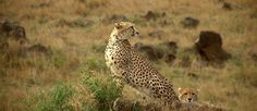 Saikat Rudra Member Profile -- National Geographic Your Shot