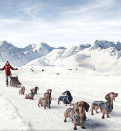 Why the Germans never win a dog sled race - Democratic Underground