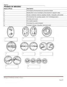 Meiosis Worksheet Meiosis Stages Worksheet Answers | biyoloji ...