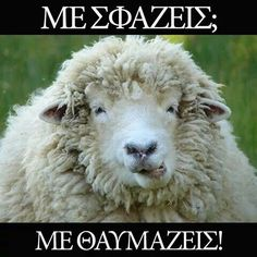 Solomon (Old Testament) – Song Of Solomon (King James Version) Sheep Meme, Barn Animals, Funny Pictures, Funny Pics, Funny Stuff, Medical, Songs, History, Kristen Ashley