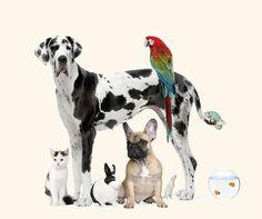 Imágenes de animales bonitos ☺,divertidos y graciosos para facebook. Fotos de…
