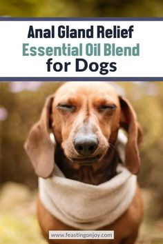Anal Gland Relief Essential Oil Blend for Dogs Essential Oils Dogs, Essential Oil Blends, Dog Commands Training, Feeling Scared, Downward Dog, Essentials, Joy, Rhodes, Health Tips