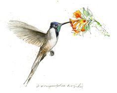 Lovely hummingbird drawing.