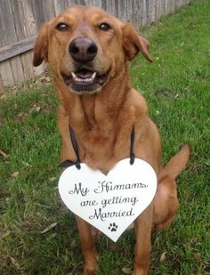 Dog sign - my Humans are Getting Married -One sided - HEART for Dog or Baby, Wedding Sign, Ring Bearer Sign by CastleInnDesigns on Etsy https://www.etsy.com/listing/183506034/dog-sign-my-humans-are-getting-married
