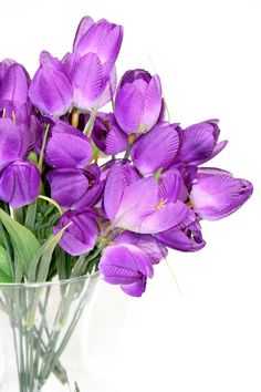 My favorite color is purple and these are my favorite flowers.