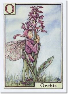 Cicely Mary Barker - A Flower Fairy Alphabet - The Orchis Fairy Archival Fine Art Paper Print
