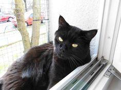 Unser Isegrim auf seinem Balkon Animals, Photos, Balcony, Animais, Animales, Animaux, Animal, Dieren