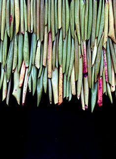 Rhododendron ophangen aan draad of stok geregen