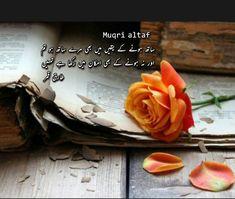 Image Poetry, Urdu Words, Cabbage, Vegetables, Food, Essen, Cabbages, Vegetable Recipes, Meals