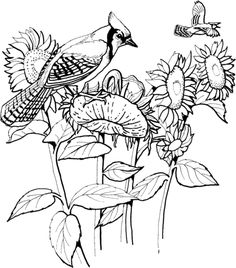 Song Sparrow Coloring Page