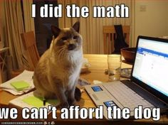 Cats are so smart.