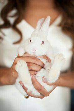 Not a good way to hold a bunny. Nevertheless this bunny is perfect. Funny Bunnies, Baby Bunnies, Cute Bunny, Cutest Bunnies, Kawaii Bunny, Hunny Bunny, Easter Bunny, Beautiful Creatures, Animals Beautiful