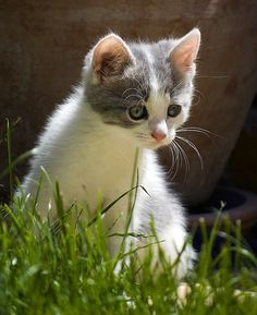 Source: picolaine-chats
