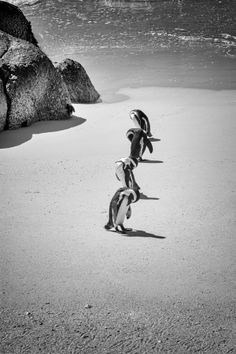 Dude, how perfect would it be if you had a penguin pal? You could take it to the beach AND in the snow! @Julie Coppa