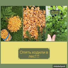 🌲🐾🐿В лес по грибы, по ягоды🍄💐🍀 #заработок #работа #успех #доход #красота #работанадому #счастье #лайки #семья #жизнь #лето #мама #питер #мечта #онлайн