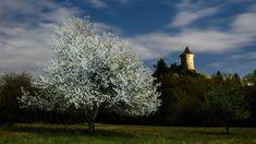 Csokorba szedtük Magyarország tíz legszebb tavaszi kirándulóhelyét   Sokszínű vidék Dandelion, Flowers, Plants, Dandelions, Plant, Taraxacum Officinale, Royal Icing Flowers, Flower, Florals