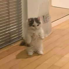 Cute Cat Memes, Funny Cats, Funny Animals, Funny Animal Memes, I Love Cats, Cool Cats, Kittens Cutest, Cats And Kittens, Cat Icon