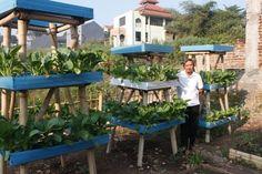Berkebun yuuk !!: Berkebun Sayur di Halaman