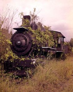 Abandoned Lee Tidewater Cypress Company Locomotive, c.a 1950 Abandoned Train, Abandoned Buildings, Abandoned Houses, Abandoned Places, Abandoned Vehicles, Abandoned Ships, N Scale Train Layout, Train Layouts, Train Pictures