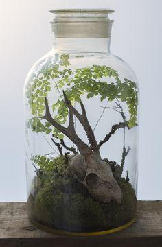 Last Breath ~ terrarium by Ken Marten, with moss & maidenhair fern #myt