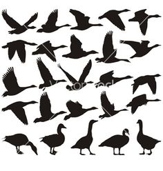 Geese silhouette on VectorStock