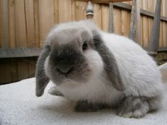 Aw.. I miss my Pebbles. This bunny reminds me of her when she was a baby.