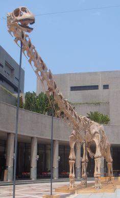 Daxiatitan.jpg (1746×2870) - D. binglingi. Dinosauria, Saurischia, Sauropodomorpha, Sauropoda, Macronaria. Auteur : Tiouraren, 2013.