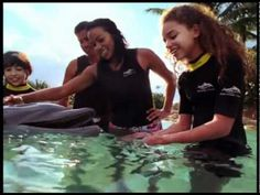 Swim with dolphins, snorkel with tropical fish and rays, hand-feed exotic birds, and relax on pristine beaches. Discover a place beyond words... at Discovery Cove Orlando.