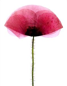 Flowers by Vue Represents , via Behance