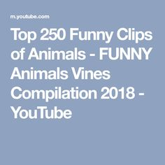 Top 250 Funny Clips of Animals - FUNNY Animals Vines Compilation 2018 - YouTube