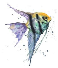 watercolor angel fish painting   Watercolor Fish Paintings - Alluring Angelfish by Alison Fennell