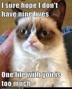 One Life to Endure Grumpy Cat Quotes #GrumpyCat #Meme #Humor