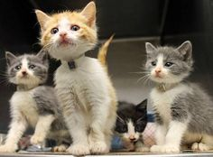 The Hancock's: Cutest kittens ever are out of time at high-kill SC shelter