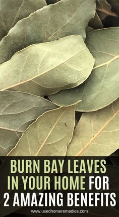 Burn Bay Leaves In Your Home For 2 Amazing Benefit. Burn Bay Leaves In Your Home For 2 Amazing Benefits! Home Health Remedies, Natural Health Remedies, Natural Cures, Herbal Remedies, Natural Treatments, Natural Health Tips, Holistic Remedies, Burning Bay Leaves, Health Tips