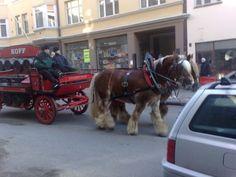 Sinebrychoff beer horses. Helsinki Finland.