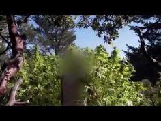Marijuana Nation - Full National Geographic documentary - YouTube