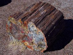 Petrified wood is the name given to a special type of fossilized remains of terrestrial vegetation. It is the result of a tree or tree-like plants having completely transitioned to stone by the process of permineralization. All the organic materials have been replaced with minerals (mostly a silicate, such as quartz), while retaining the original structure of the stem tissue. Unlike other types of fossils which are typically impressions or compressions, petrified wood is a three-dimensional ... Nature Words, Types Of Crystals, Great Hobbies, White Magic, Desert Plants, Petrified Wood, Rocks And Minerals, Washington State, Fossils