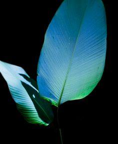 Alex Black Costa Rica, Plant Leaves, Nature, Plants, Instagram, Black, Naturaleza, Black People, Plant