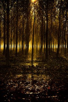Lights in the woods by Andy 58 on 500px